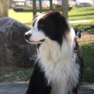 Dogsarnthavingaparty